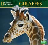 Giraffes - 2016 Calendar Calendars