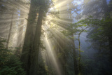 Morning Sun Explosion, California Coast Redwoods Photographic Print by Vincent James