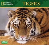 Tigers - 2016 Calendar Calendars