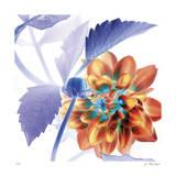 Budding Dahlia Giclee Print by Kate Blacklock