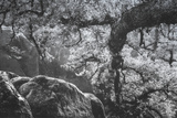 Cascade Tree Detail, Yosemite California Photographic Print by Vincent James