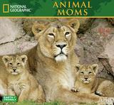 Animal Moms - 2016 Calendar Calendars