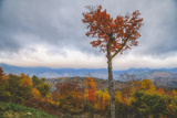 Autumn Heart Tree, White Mountain New Hampshire Photographic Print by Vincent James