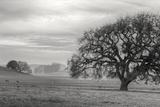 Petaluma Winter Oak Landscape, Northern California Photographic Print by Vincent James
