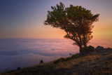Tree Above the Fog at Sunset, Marin County California Photographic Print by Vincent James