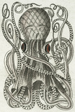 Polypus I Giclee Print by Chris Dunker