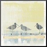Coastal Birds II Mounted Print by Ken Hurd