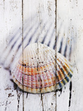 Nantucket Shells II Print by James Guilliam
