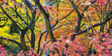 Vibrant Autumn Giclee Print by Peter Adams