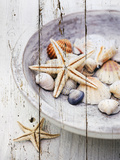 Nantucket Shells IV Giclee Print by James Guilliam