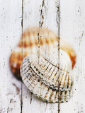 Nantucket Shells III Prints by James Guilliam