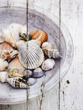 Nantucket Shells I Prints by James Guilliam