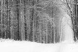 Doug Chinnery - Forest in Winter - Fotografik Baskı