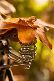Saddle Up for the Fall Photographic Print by Philippe Sainte-Laudy