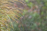 Rain Drops Photographic Print by Adrian Campfield
