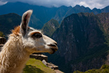 Machu Picchu - Llama with Mountains in the Background Photographic Print by G K Adams