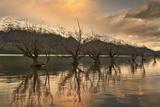 Winterlight Photographic Print by Yan Zhang