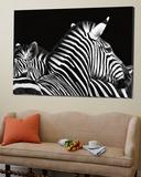 Zebra I Poster von Debra Van Swearingen