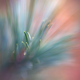 Pine Needles 1 Photographic Print by Ursula Abresch