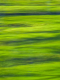 Oh So Green Photographic Print by Doug Chinnery
