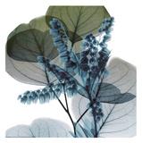 Lilly Of Eucalyptus 2 Kunstdruck von Albert Koetsier