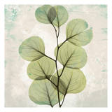 Eucalyptus Aged stone Plakat af Albert Koetsier