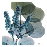 Lilly Of Eucalyptus Print by Albert Koetsier