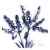 Albert Koetsier - Lily of the valley bush - Poster