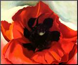 Poppy Mounted Print by Georgia O'Keeffe