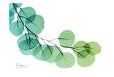 Verde eucalipto Stampe di Albert Koetsier
