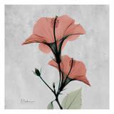 Hibiscus Marsala Prints by Albert Koetsier