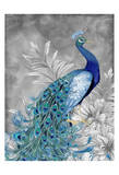 Peacock Beauty 2 Prints by Nicole Tamarin