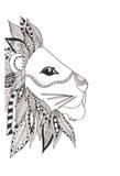 Lone Lion Print by Pam Varacek