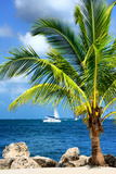Paradise Palm Tree with a Sailboat on the Ocean - Florida Papier Photo par Philippe Hugonnard