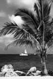 Paradise Palm Tree with a Sailboat on the Ocean - Florida Reproduction photographique par Philippe Hugonnard