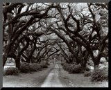 Path in the Oaks II, Louisiana Mounted Print by Monte Nagler