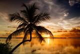 Palm Paradise at Sunset - Florida - USA Fotografisk tryk af Philippe Hugonnard