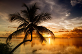 Palm Paradise at Sunset - Florida - USA Photographic Print by Philippe Hugonnard