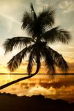 Palm Paradise at Sunset - Florida - USA Photographic Print by Philippe Hugonnard
