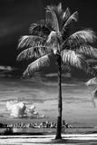Palm Tree overlooking Downtown Miami - Florida Fotografie-Druck von Philippe Hugonnard