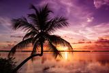 Palm Paradise at Sunset - Florida - USA Papier Photo par Philippe Hugonnard