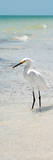 White Heron - Florida Photographic Print by Philippe Hugonnard