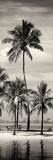 Paradisiacal Beach overlooking Downtown Miami - Florida Reprodukcja zdjęcia autor Philippe Hugonnard