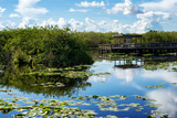 Everglades National Park - Unesco World Heritage Site - Florida - USA Photographic Print by Philippe Hugonnard