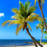 Palms on a White Sand Beach in Key West - Florida Photographic Print by Philippe Hugonnard