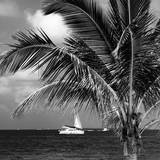 Paradise Palm Tree with a Sailboat on the Ocean - Florida Photographic Print by Philippe Hugonnard