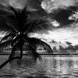 Silhouette of Palm Tree at Sunset Photographic Print by Philippe Hugonnard