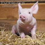 Lovable Pigs - 2016 Calendar Calendriers