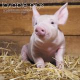 Lovable Pigs - 2016 Calendar Calendars
