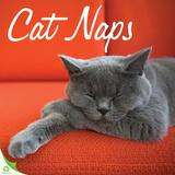 Cat Naps - 2016 Calendar Calendars